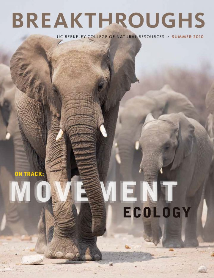 Cover of Breakthroughs Summer 2010 focuses on movement ecology