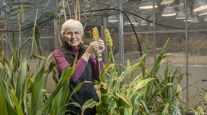 peggy lemaux with grain