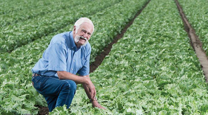Jim Lugg in a lettuce field