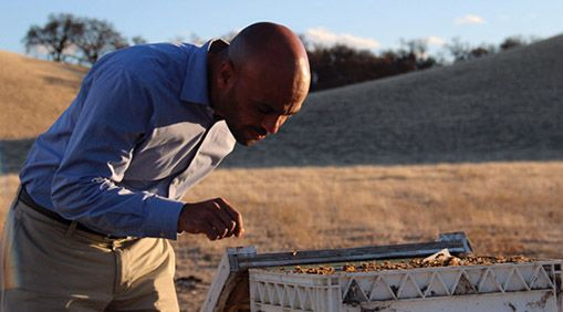 Solomon visits his beehives in Northern California. PHOTO: Molly Oleson